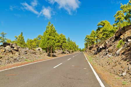 Landscape with road in pine grove, mountains, sea in Teide National Park, Tenerife, Canary Islands, Spain  Stock Photo