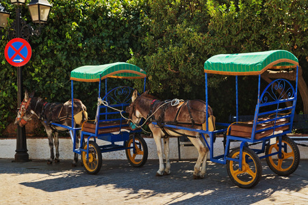 Resting donkeys harnessed to the cart resting in Mijas village. Andalusia. Spain 스톡 콘텐츠