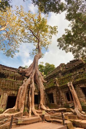 Classical picture of Ta Prohm Temple, Angkor, Cambodia Stock Photo