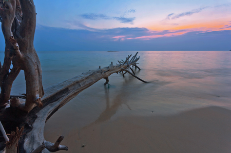 Оld wood snag on tropical beach at beautiful sunset. Nature background. Nai Yang beach. Phuket. Thailand