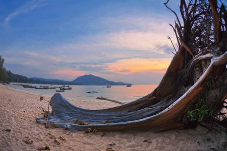 Оld wood snag on tropical beach at beautiful sunset. Nature background. Nai Yang beach. Phuket. Thailand