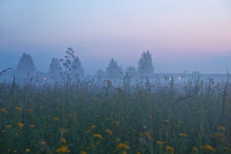 Foggy summer field after sunset. Nature background