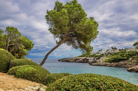 Trees on the slope of mountain. Mallorca island, Spain Mediterranean Sea, Balearic Islands.