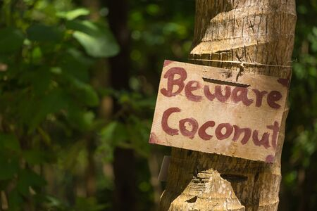 Announcement with Beware coconut under the coconut palm tree Stock Photo