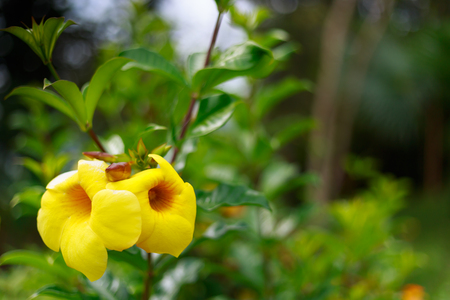 Close up on the yellow flower in the garden.