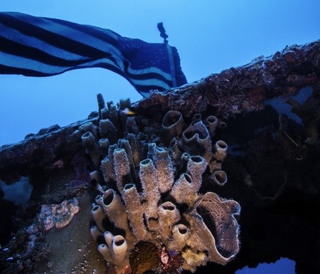 Coral growing under the US Flag on the Spiegel Grove in Key Largo, Florida