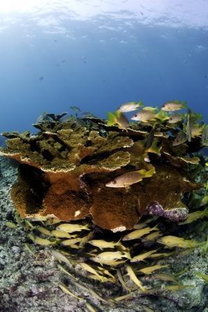 caribbean food: Coral Reefs of North America