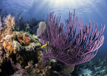color key: Coral Reefs of North America