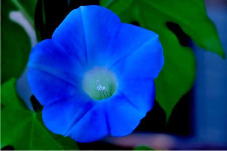 파란색의 꽃 1