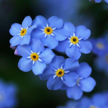 青 3 の花