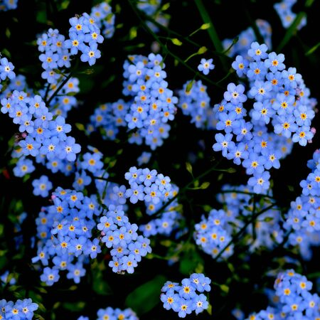 青 4 の花