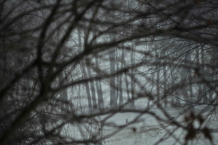 木 6 写真素材