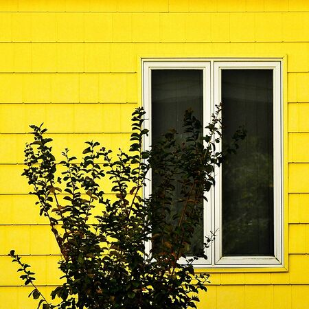 gelb haus: Yellow House