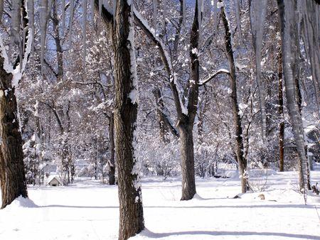 Winter Elm Trees