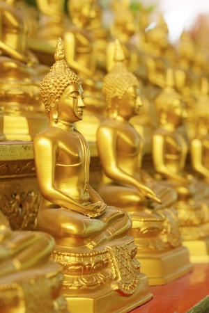 Many statue of gold Buddha on wood wall Side Perspective photo