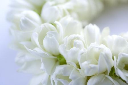 Close up Thai worship garland Stock Photo
