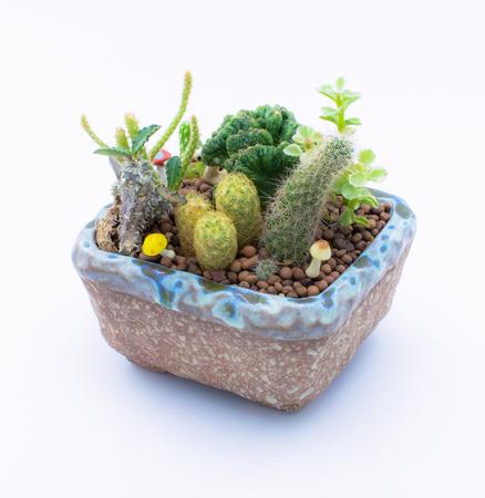 Miniature succulent plants in clay pot Stock Photo