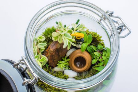 Small plants in the glass bottle