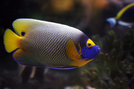 the beautiful fish floats in the aquarium Stock Photo - 1615145