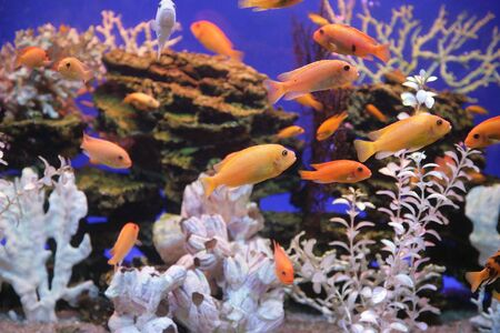 Aquarium with bright small fishes and corals Stock Photo - 2630025