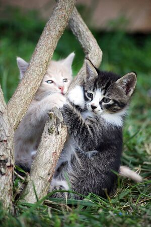 Two playing small kittens in a garden photo
