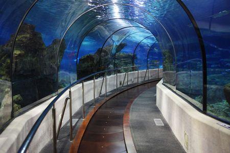 oceanarium: tunnel in an oceanarium between glasses