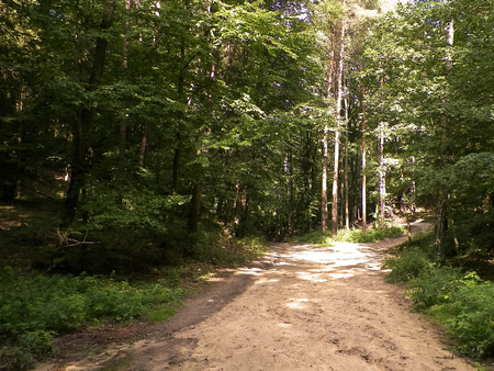 Road in forest, Polish nature. Traveling and nature concept. 版權商用圖片