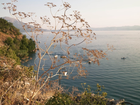 Close up of dried plant and beautiful water of Ochrid Lake, Macedonia. Balkan nature and travel concept.