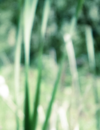 Blured typha plant leaves as nature background. Copy space. Stock Photo - 119596931