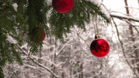 Close up of red Christmas balls in winter forest. Christmas card, copy space. Stock Photo