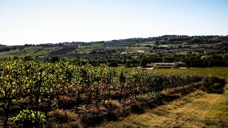 Landscape of the Tuscan vineyards, Chianti region, Italy. Nature and agriculture concept. Vacations in Italy. Copy space. Banco de Imagens