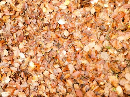 Autumn leaves as nature background. Copy space.