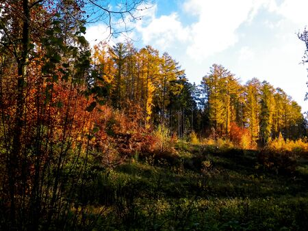 Beautiful Polish golden autumn. Golden, autumnal trees against blue sky with white clouds. Nature and travel concept.