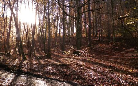 Autumn forest in sunny day. Golden Polish autumn. Nature concept Stock Photo