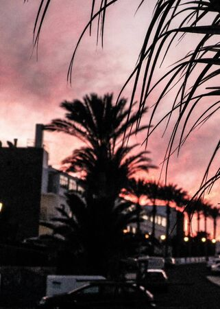 Close up of palm leaf and view on streets of Playa Blanca during sunset. Exotic, tropical nature and city life. Tourism concept. Lanzarote, Canarian islands. 写真素材