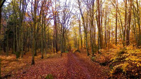 Autumn forest landscape. Golden Polish autumn. Nature concept