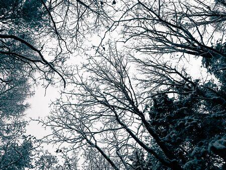 Winter forest landscape. Nature concept, BW filter toned.