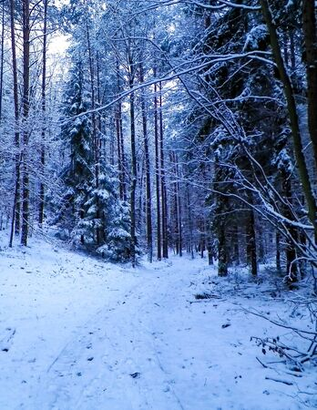 Winter forest landscape. Nature concept, abstract filter toned.