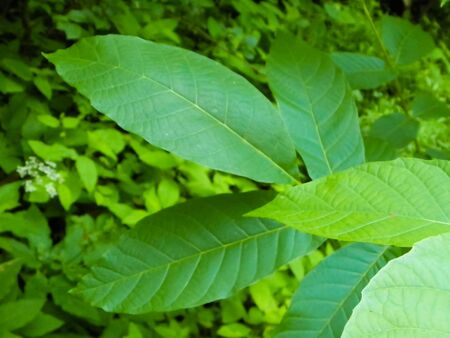 Green leaf as nature background. Copy space, nature concept.