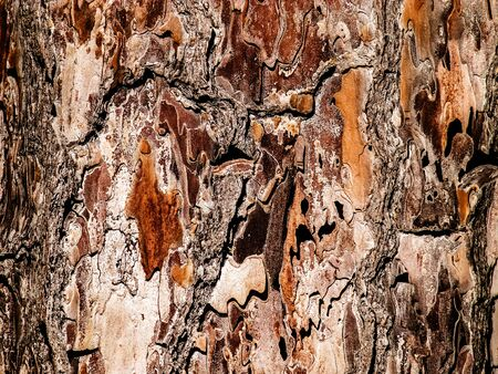 Tree bark as nature background. Tree trunk. Copy space, nature concept. Stockfoto