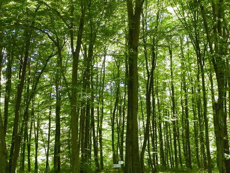 Paesaggio forestale estivo, natura polacca. Natura e concetto di turismo.