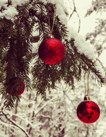 Christmass ball on tree twig in forest, winter season, Christmas time. Copy space. Stock Photo