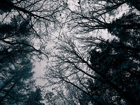 Winter forest landscape. Nature concept, BW filter toned. Stock Photo