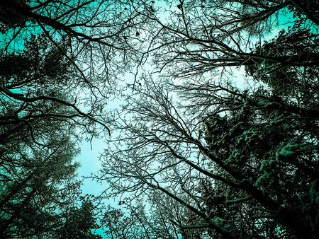 Winter forest landscape. Nature concept, abstract filter toned. Stock Photo