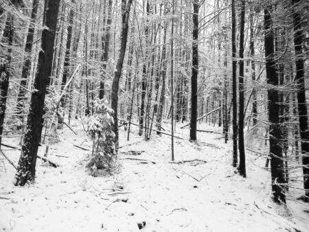 Winter forest landscape. Nature concept, abstract bw filter toned.