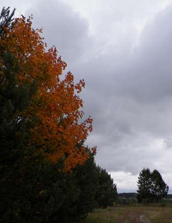 First days of autumn - orange color tree. Kashubian Region, Poland. Nature concept. 版權商用圖片
