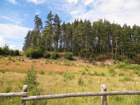Meadow in forest in Pelcznica National Park. Beautiful nature of northern Poland.