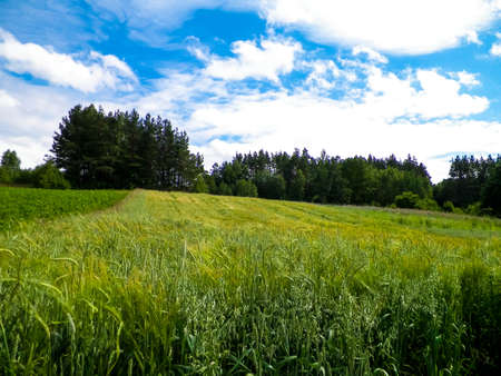 Meadow in forest in Pelcznica National Park. Beautiful nature of northern Poland. 版權商用圖片 - 151739508