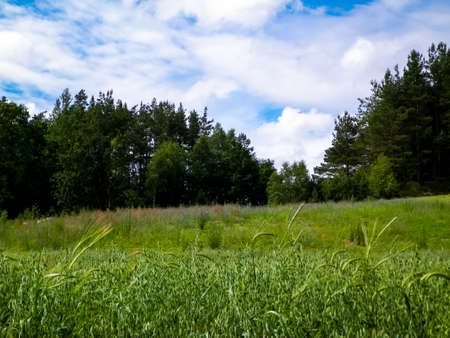 Meadow in forest in Pelcznica National Park. Beautiful nature of northern Poland. 版權商用圖片 - 151739527