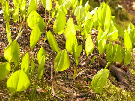Close up of little green plants growing in forest. Nature background.